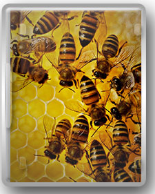 راهنمای جامع پرورش زنبور عسل