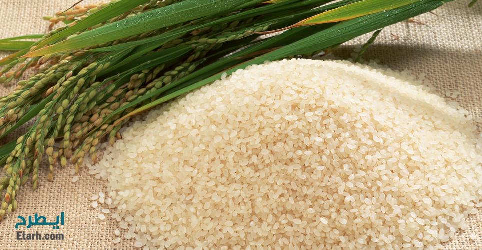 طرح احداث واحد فرآوری محصولات جانبی برنج