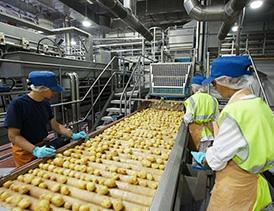 تولید سیب زمینی منجمد آماده طبخ( فرنچ فرایزر)