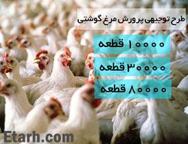 طرح توجیهی مرغداری گوشتی