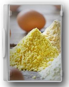 راهنمای صنایع تولید پودر و مایع تخم مرغ