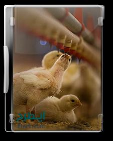 راهنمای جامع پرورش مرغ گوشتی