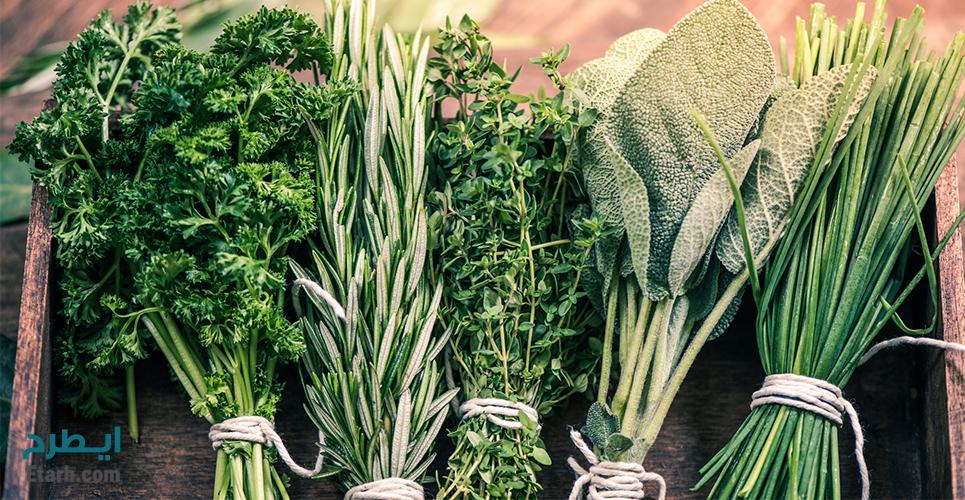 طرح تولید و بسته بندی انواع سبزی خشک