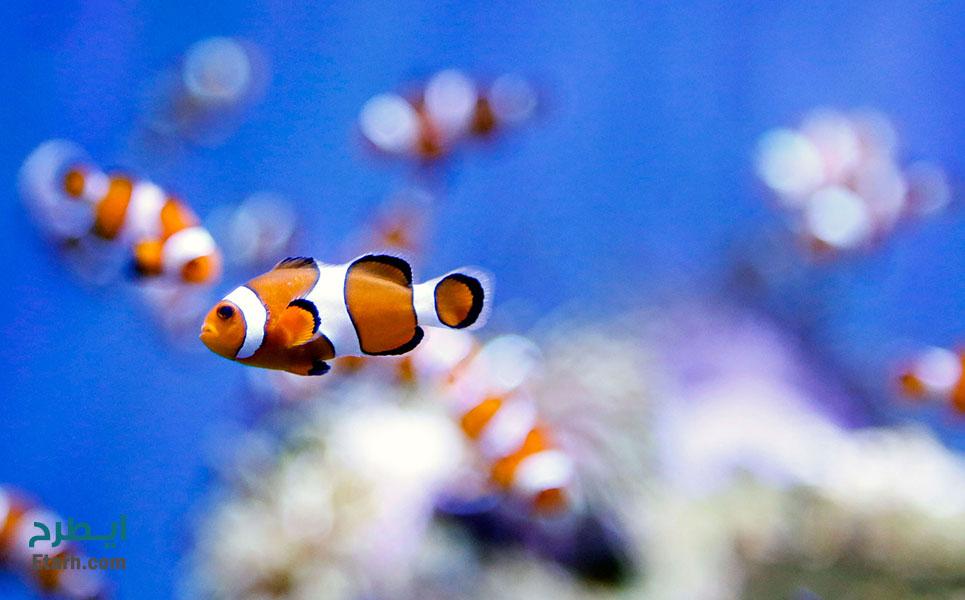 طرح پرورش ماهیان زینتی (1)
