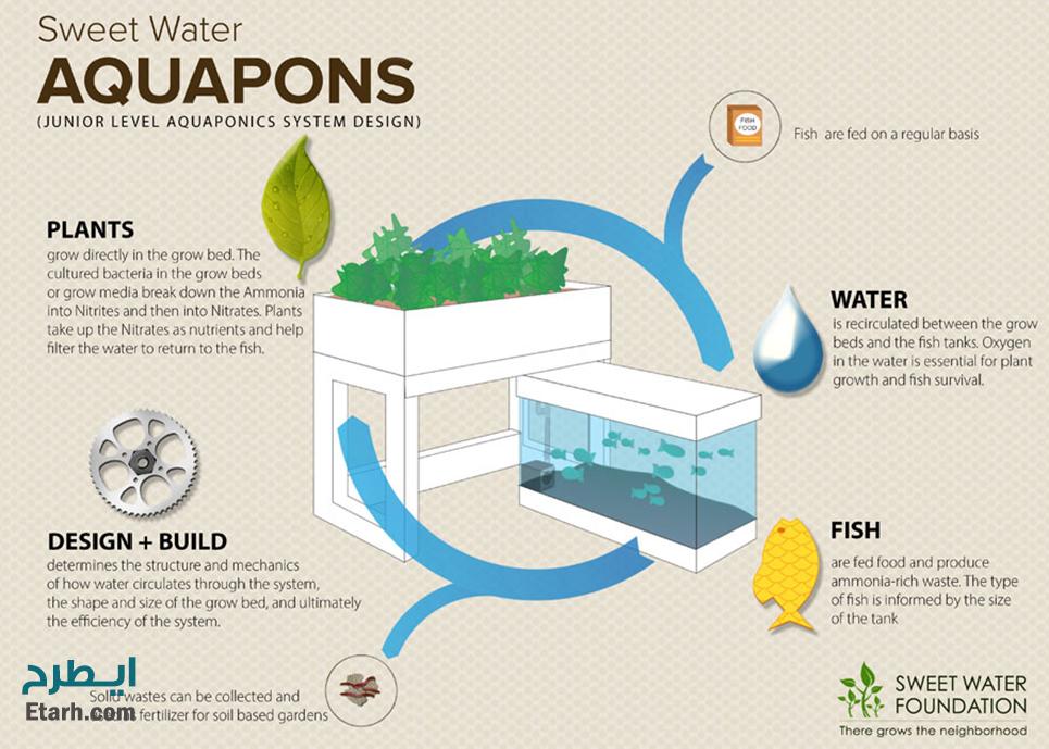 طرح پرورش ماهي در سيستم آكوآپونيك