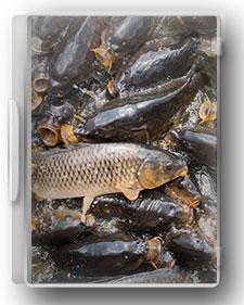راهنمای جامع پرورش ماهی گرمابی