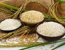 تاسیس شرکت بازرگانی برنج