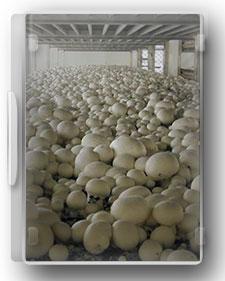 راهنمای جامع پرورش قارچ