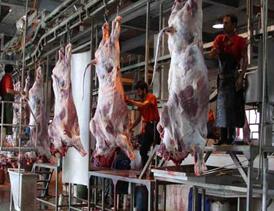احداث کشتارگاه صنعتی دام و بسته بندی گوشت قرمز