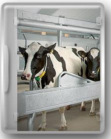 راهنمای جامع پرورش گاو شیری