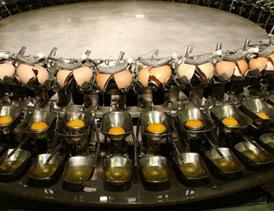 احداث و بهره برداری از واحد تولید تخم مرغ مایع