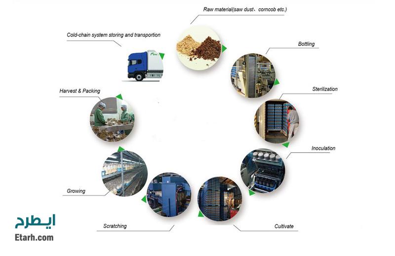 فرآیند تولید قارچ خوراکی