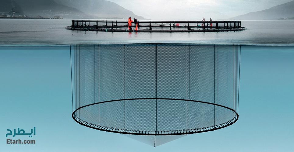 طرح پرورش ماهی در قفس