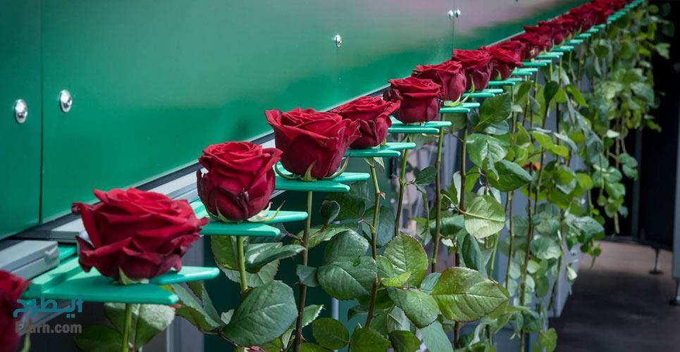 طرح تولید درجه بندی، بسته بندی و خشک كردن گل و گياه به روش Dry Freez