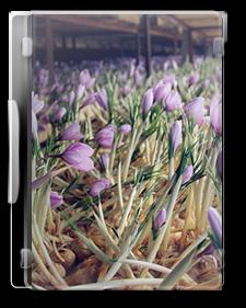 بسته راهنمای احداث و بهره برداری از گلخانه زعفران به روش آیروپونیک