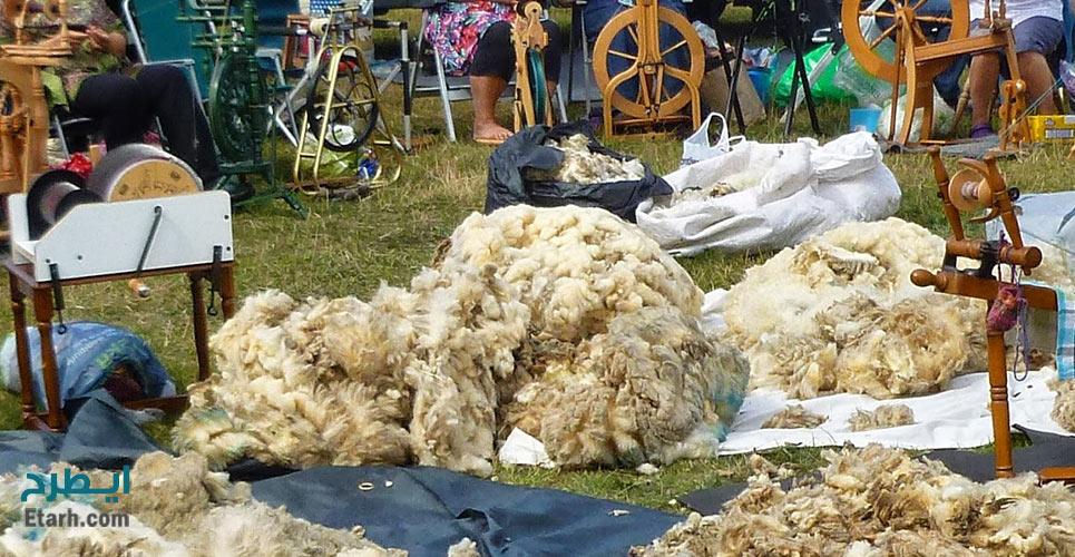 طرح تولید پشم شسته شده