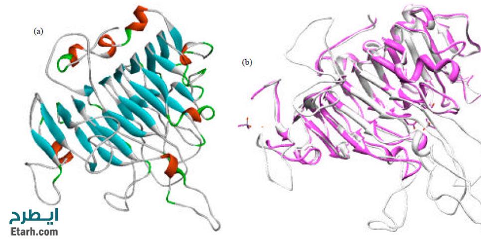 طرح تولید آنزیم پکتین استراز