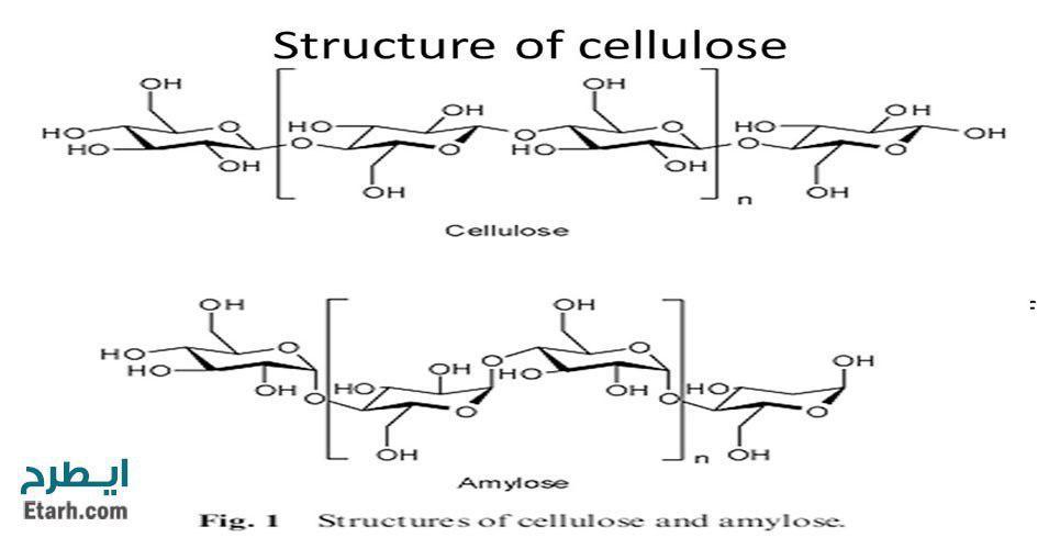 طرح تولید آنزیم سلولاز
