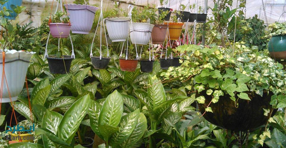 طرح احداث گلخانه گیاهان زینتی