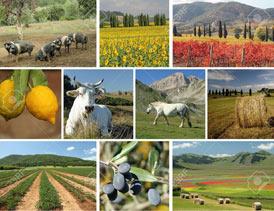 معرفی فرصتهای شغلی در بخش کشاورزی