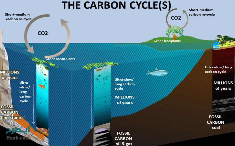 طرح تولید محرک رشد بیوفسفر 1