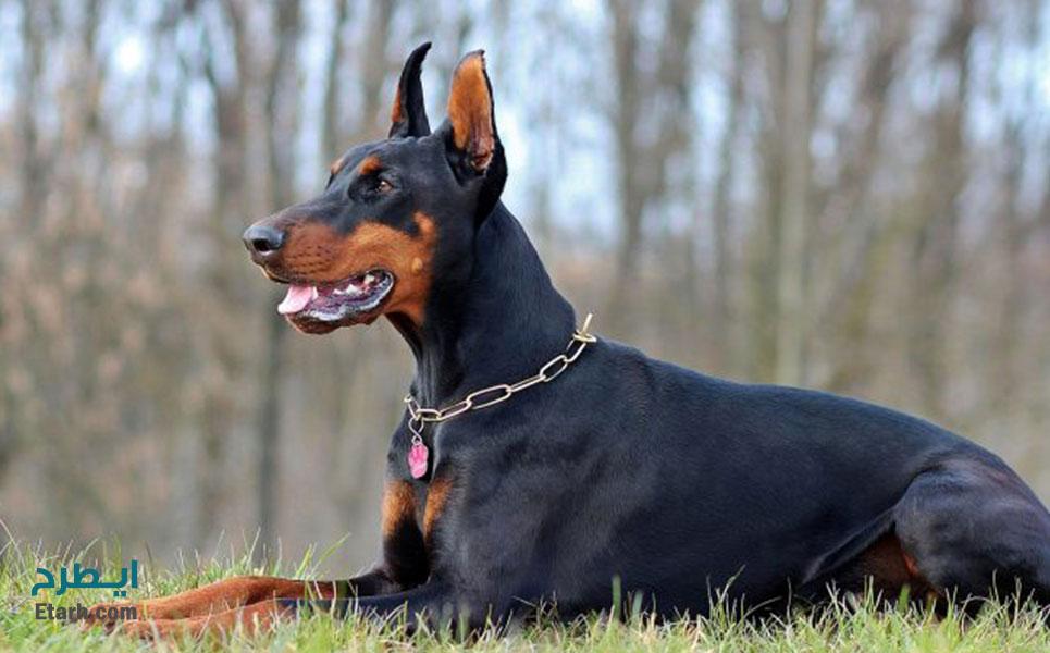 طرح احداث مرکز پرورش و تربیت سگ های شکاری و نگهبان (1)