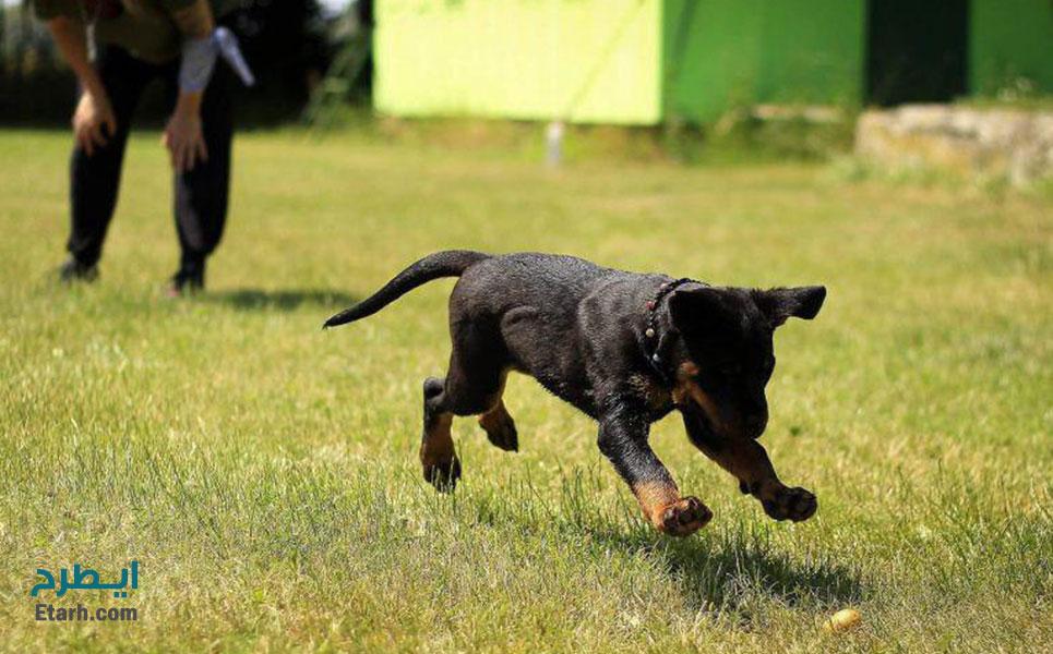 طرح احداث مرکز پرورش و تربیت سگ های شکاری و نگهبان (4)