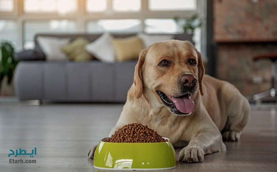 طرح تولید خوراک سگ و گربه (1)