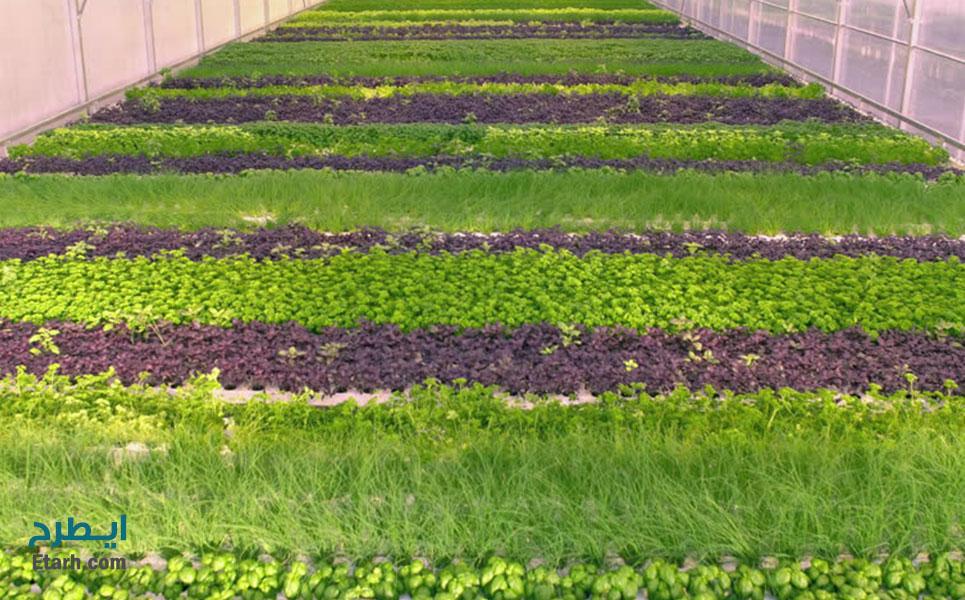 طرح تولید سبزیجات در گلخانه (1)