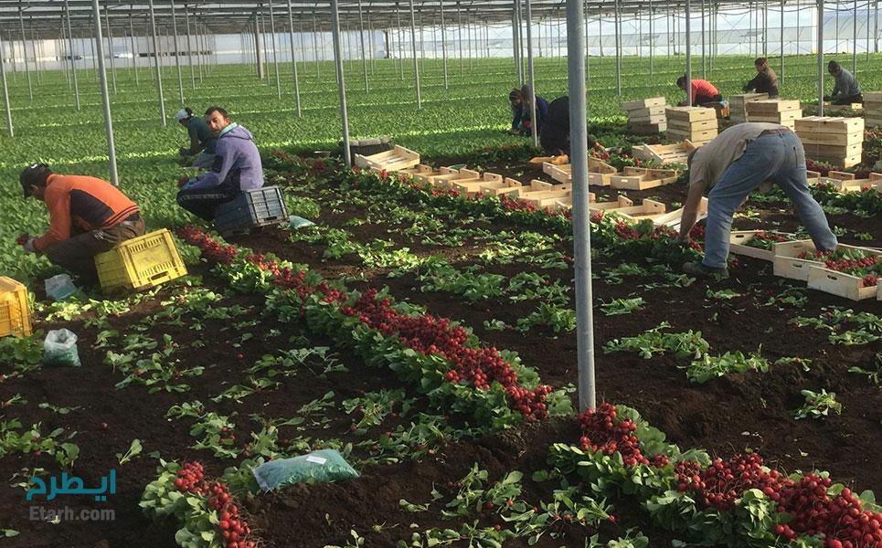 طرح تولید سبزیجات در گلخانه (4)